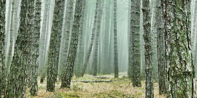 Οικονομική ενίσχυση ρητινεργατών για την προστασία των δασών