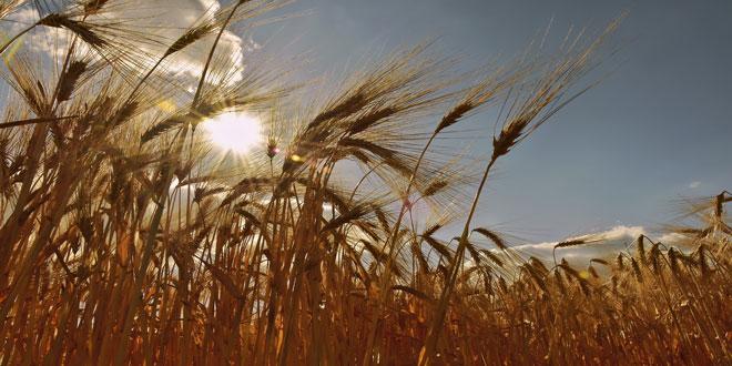 Οι προβλέψεις του FAO για την παγκόσμια παραγωγή γεωργικών προϊόντων το 2019