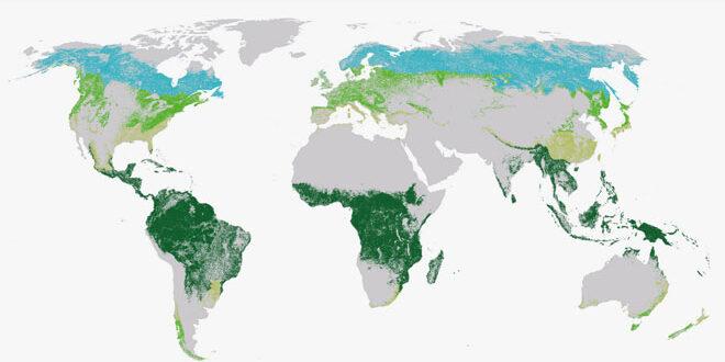 Όλο και λιγότερες οι δασικές εκτάσεις παγκοσμίως
