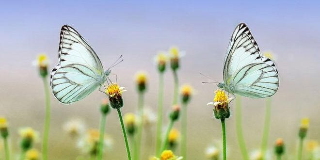 Γνωρίζουμε τις περιοχές Natura 2000 μέσα από φωτογραφίες
