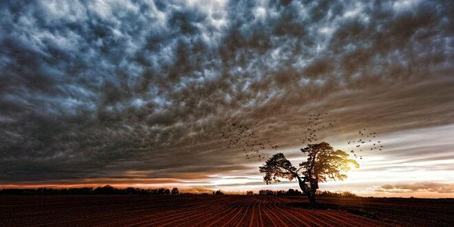 Βιοποικιλότητα γεωργικών εκτάσεων: Χωρίς αποτέλεσμα οι πολιτικές της Ε.Ε.