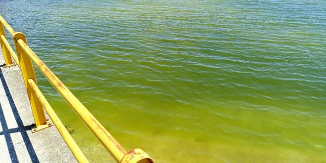 Γιατί πρασίνισαν οι ακτές της Καβάλας