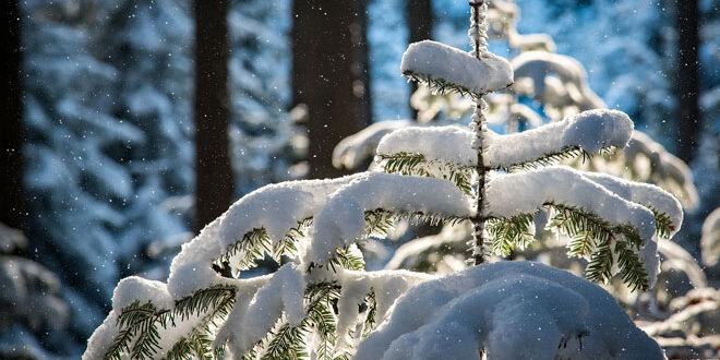 Γιατί έσπασαν τα δέντρα. Υψηλές θερμοκρασίες και υγρό χιόνι